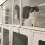 Cat Boarding in Pymble