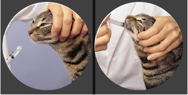Administering medication to your cat