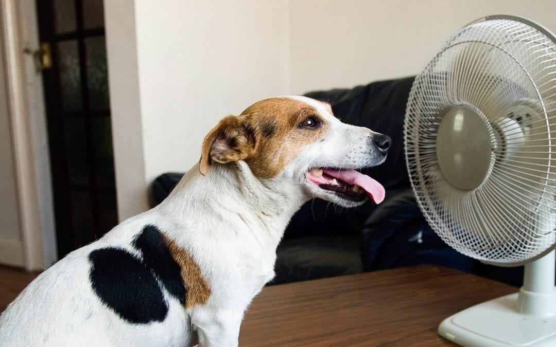 Heat dangers for companion animals